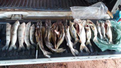 PMA e Imasul prendem em flagrante campo-grandense por pesca durante a piracema