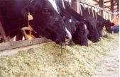 Saúde: Agricultura proíbe uso de antimicrobianos em ração para animais