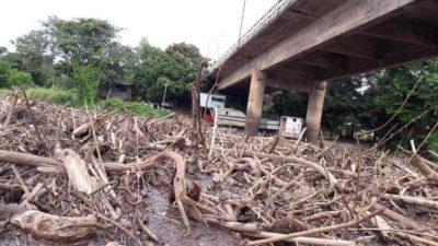 Meio Ambiente: Galhos, bambus e troncos de árvores 'trancam' trecho de rio do Pantanal de MS