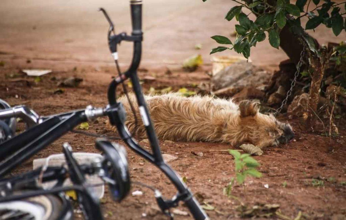 Perigo: Abelhas em ferro-velho atacam seis moradores e matam 2 cachorros