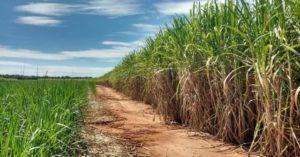 Pesquisas: Vinhaça de cana pode virar fertilizante